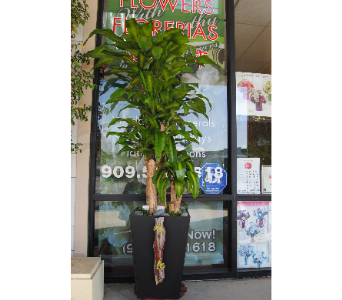 Lucky tree in Rowland Heights CA, Charming Flowers