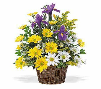 Iris and Daisy Basket in McLean VA, MyFlorist