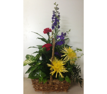 Live Green Plants with Bright Fresh - 8x10 Basket in Wyoming MI, Wyoming Stuyvesant Floral