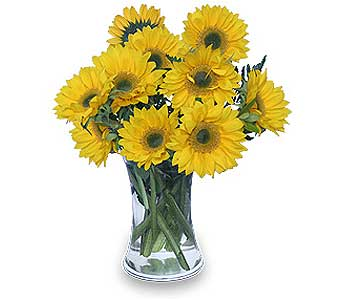 Hello Sunshine! in Sayville NY, Sayville Flowers Inc