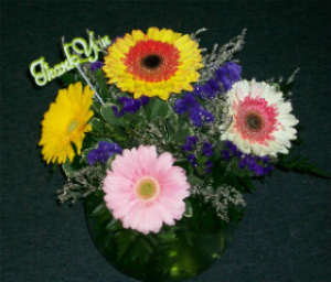 Archer''s Gerber Daisy Bubble Bowl in Huntington WV, Archer's Flowers, Inc.