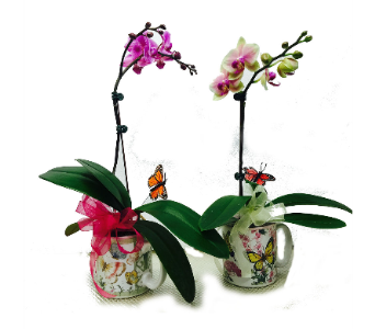 Orchid in Mug in Waterbury CT, The Orchid Florist