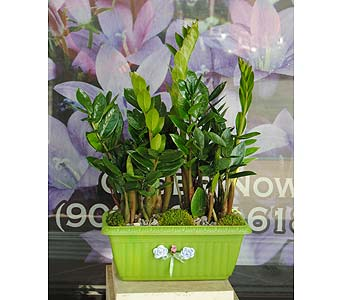 Make Rich with Zamia in Rowland Heights CA, Charming Flowers