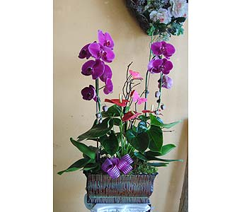 Sweet Spring Orchids in Rowland Heights CA, Charming Flowers