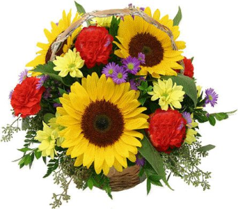 Celebration Sunflower Basket  in Canton PA, Stulls Flowers