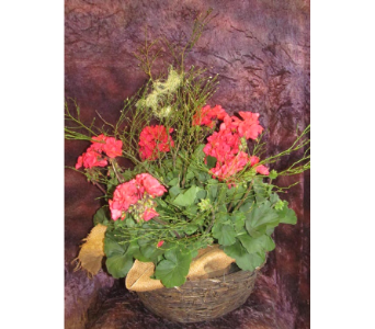 Red Geranium in Newton KS, Designs By John Flowers & Tuxedos, Inc