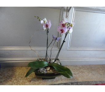 Beautiful  Orchid  in a Ceramic Planter in Orleans ON, Crown Floral Boutique