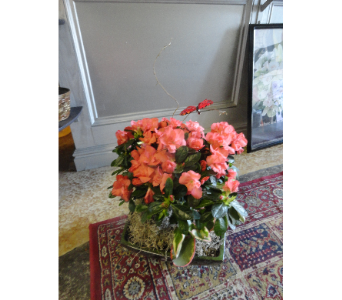 Azelea Mix in Orleans ON, Crown Floral Boutique
