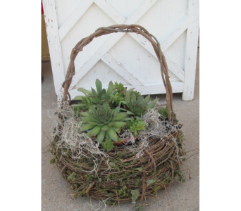 Succulent Basket in Newton KS, Designs By John Flowers & Tuxedos, Inc