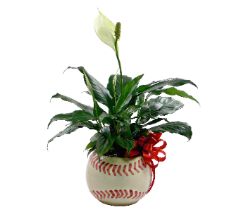 Play Ball! in Indianapolis IN, Steve's Flowers and Gifts