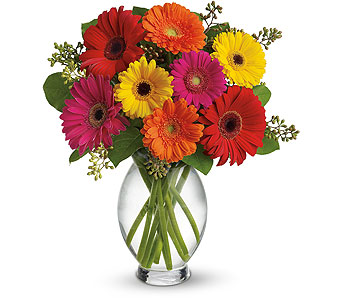 Teleflora's Gerbera Brights in Burlington ON, Appleby Family Florist