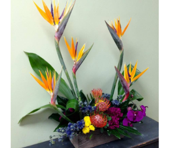 Love my Tropics in Fairless Hills PA, Flowers By Jennie-Lynne