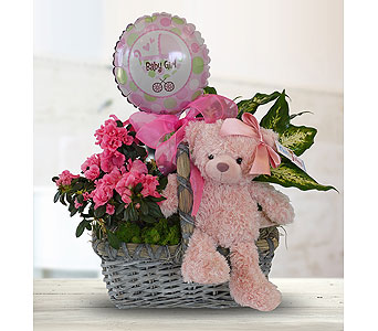 Baby Girl Plant Basket in Dallas TX, In Bloom Flowers, Gifts and More