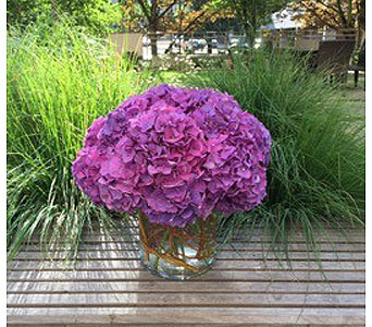 HYDRANGEA DREAM BOUQUET in Bellevue WA, CITY FLOWERS, INC.