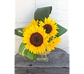 SUNNY SUNFLOWERS in Vermilion AB, Fantasy Flowers
