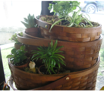 FAIRY GARDEN BASKETS in St. Joseph MO, Butchart Flowers Inc & Greenhouse