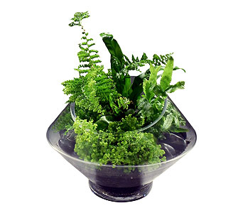 Lush Green Fern Terrarium in Detroit and St. Clair Shores MI, Conner Park Florist
