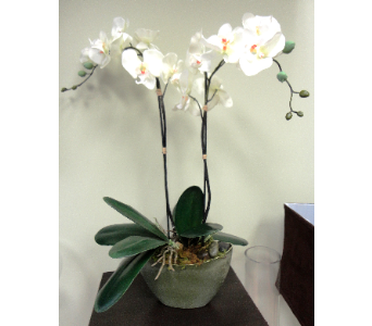 Double Faux Orchid  in Tampa FL, Buds Blooms & Beyond