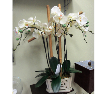 Faux Orchids with Bamboo in Tampa FL, Buds Blooms & Beyond
