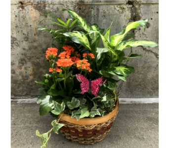 Dish Gardens Green and Blooming Plants Local Delivery