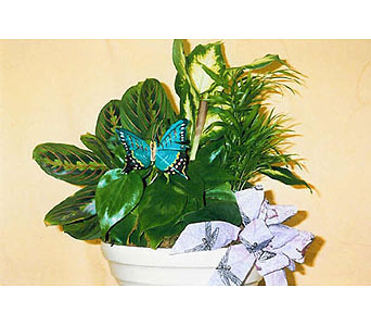 Butterfly Dish Garden in The Woodlands TX, Botanical Flowers and Gifts