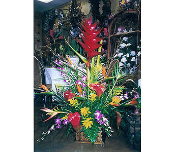 Tropical in Color in The Woodlands TX, Botanical Flowers and Gifts