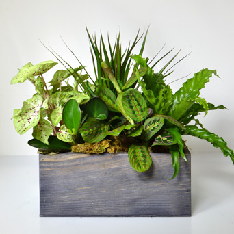 Willow Plant Basket in Dallas TX, Dr Delphinium Designs & Events