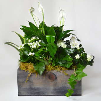 Peace on Earth Plant Basket in Dallas TX, Dr Delphinium Designs & Events