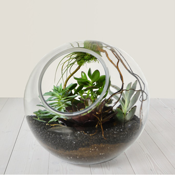 Earth & Air Terrarium in Dallas TX, Dr Delphinium Designs & Events