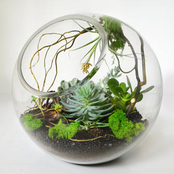 Emerald City Terrarium in Dallas TX, Dr Delphinium Designs & Events