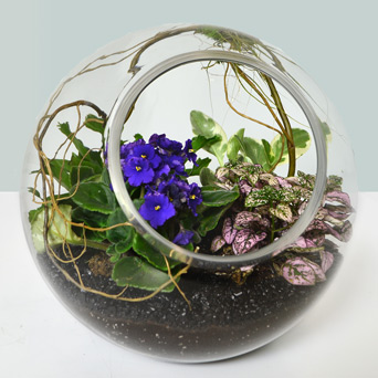 Fleurette Africain Plant Terrarium in Dallas TX, Dr Delphinium Designs & Events