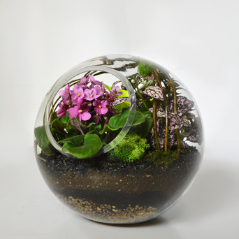 Jungle Oasis Plant Terrarium in Dallas TX, Dr Delphinium Designs & Events