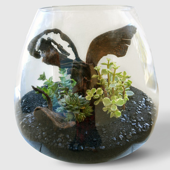 Utopia Terrarium in Dallas TX, Dr Delphinium Designs & Events