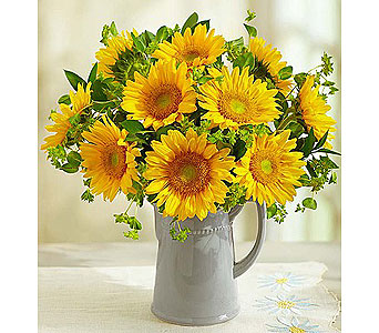 Pitcher Full of Sunflowers in Bradenton FL, Ms. Scarlett's Flowers & Gifts