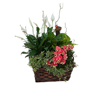 Living Blooming Garden Basket in Brockton MA, Holmes-McDuffy Florists, Inc 508-586-2000