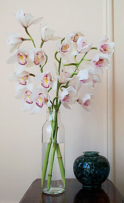 cymbidium orchid spray in Chicago IL, La Salle Flowers