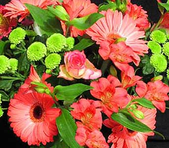 Coral Cut Flowers in Etobicoke ON, VANDERFLEET Flowers