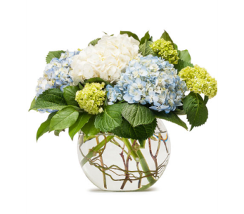 Mighty Hydrangea in Long Beach NY, Long Beach Florist, Inc.