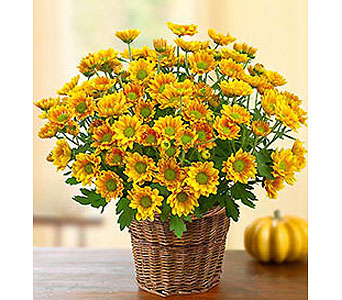 Fall Mum Basket!TM