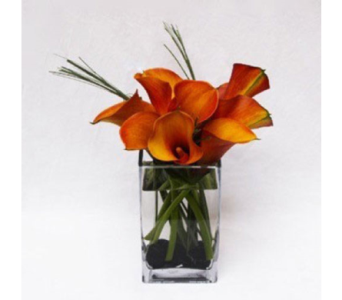 Mini Calla Delight in Bellevue WA, CITY FLOWERS, INC.