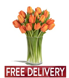 Fall Tulips - FREE DELIVERY in Cohasset MA, ExoticFlowers.biz