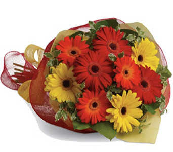 Mixture of Cut Gerbera Daisies in Timmins ON, Timmins Flower Shop Inc.
