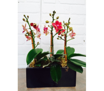Mini Orchid Planter in Redwood City CA, Redwood City Florist