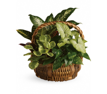 Custom Garden Basket in Bradenton FL, Bradenton Flower Shop