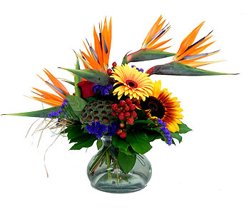 Tropical Sunrise Premium in Detroit and St. Clair Shores MI, Conner Park Florist