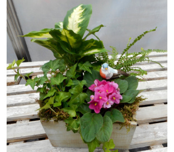 African Violet and Mixed Plants in Skowhegan ME, Boynton's Greenhouses, Inc.