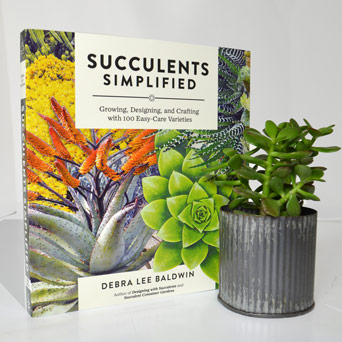 Succulents Simplified   Jade Plant in Dallas TX, Dr Delphinium Designs & Events