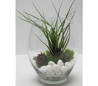 Air Plant Arrangement in Traverse City MI, Teboe Florist