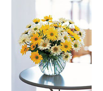 Dashing Daisies in Indianapolis IN, George Thomas Florist