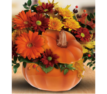 Country Pumpkin in Indianapolis IN, George Thomas Florist